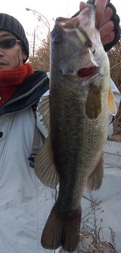 39cm_bass