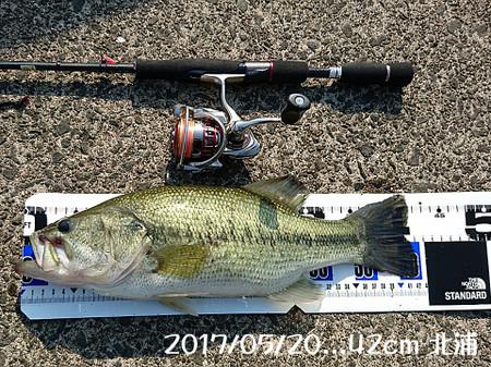 20170520_42cm