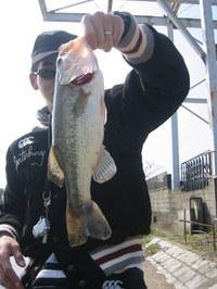 bass36cm