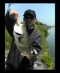 bass48cm050503